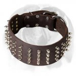 English Bulldog 3 inch Wide Genuine Leather Dog Collar with Spikes