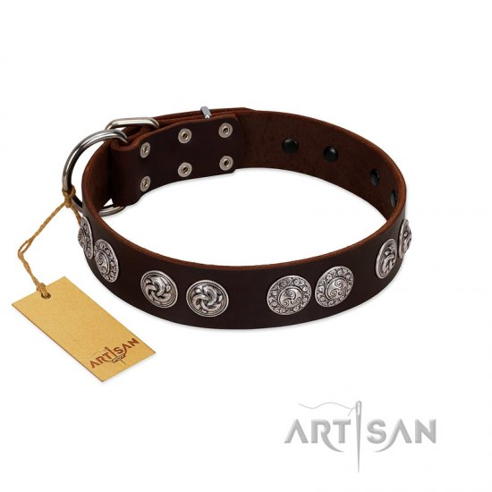 """High and Mighty"" FDT Artisan Classy Brown Leather English Bulldog Collar with Embellished Brooches"