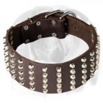 English Bulldog Large Genuine Leather Dog Collar Decorated with Studs