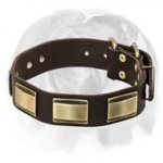 English Bulldog Gorgeous Leather Dog Collar with Beautiful Brass Plates