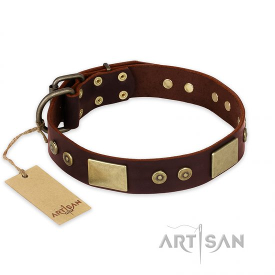 """Shining Armour"" FDT Artisan Brown Leather English Bulldog Collar with Decorations"