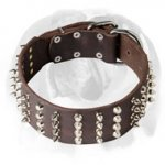 English Bulldog Leather Wide Dog Collar with Spikes and Pyramids