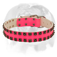 "English Bulldog Painted in Pink ""Caterpillar"" Leather Dog Collar"
