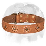 'Spring Mood' English Bulldog Stylish Leather Dog Collar