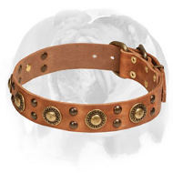 'Space-like' English Bulldog Leather Dog Collar with Brass Decor