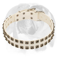 English Bulldog White Pure Leather Dog Collar with Studs