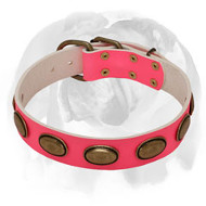 English Bulldog Pink Dog Collar Decorated with Oval Brass Plates