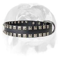English Bulldog Fashionable �Caterpillar� Dog Collar with Buckle