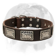 English Bulldog Leather Dog Collar Decorated with Gorgeous Massive Nickel Plates