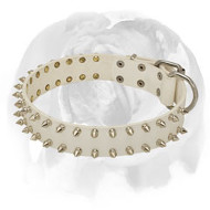 English Bulldog Noble White Leather Dog Collar with Spikes