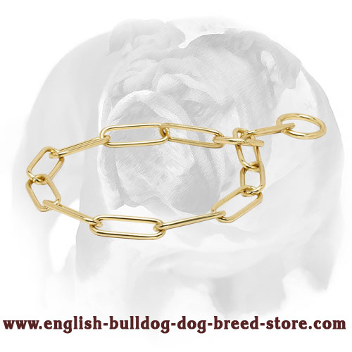Strong Dog Collar for English Bulldog