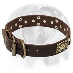 Pure leather dog collar for English Bulldog breed