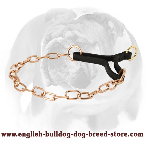 Strong Chain Dog Collar for English Bulldog