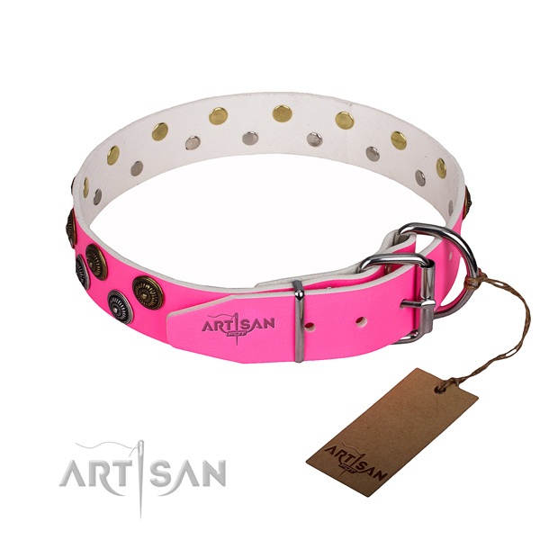 Significant full grain natural leather dog collar for daily walking