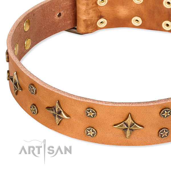 Full grain genuine leather dog collar with significant studs
