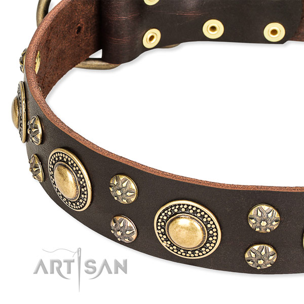 Leather dog collar with incredible embellishments