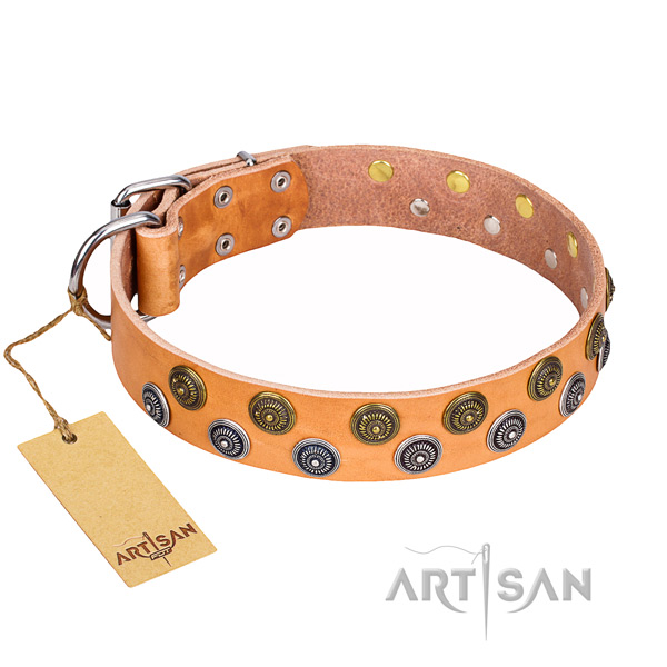 Daily use full grain leather collar with embellishments for your canine