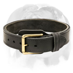 English Bulldog stylish collar