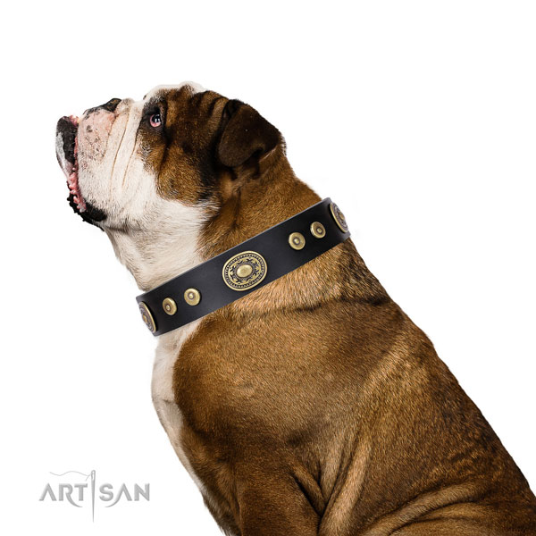 Extraordinary adorned leather dog collar for everyday use