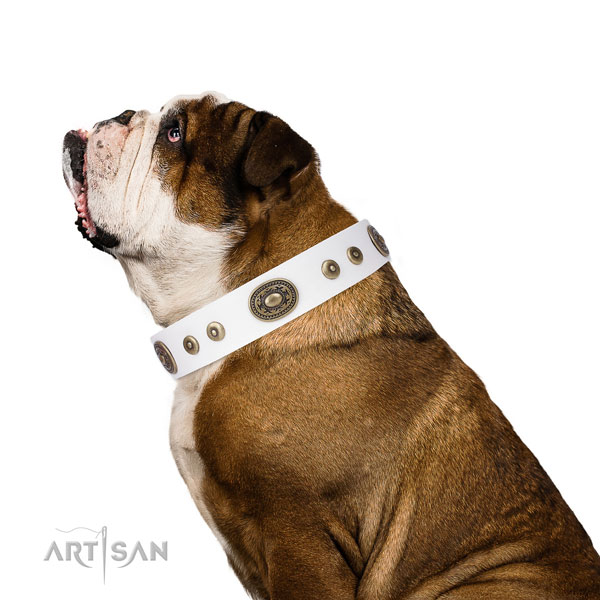 Amazing embellished leather dog collar for everyday use