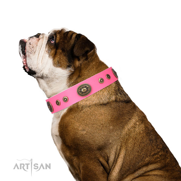 Exquisite studded genuine leather dog collar for fancy walking