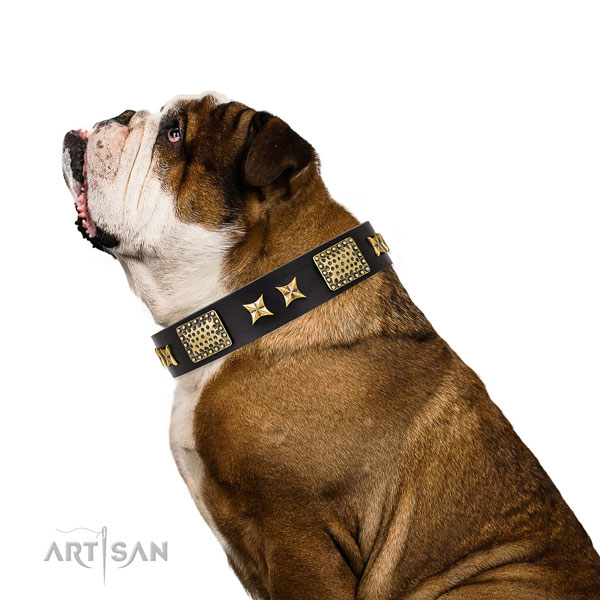 Fancy walking dog collar with unique embellishments