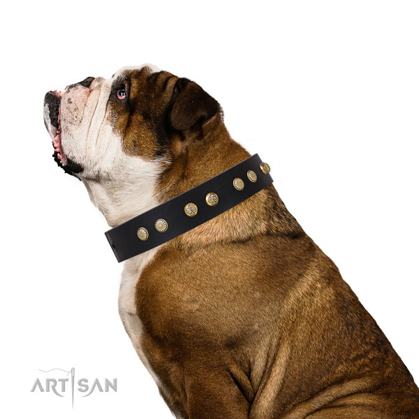 Stunning embellishments on comfortable wearing full grain natural leather dog collar