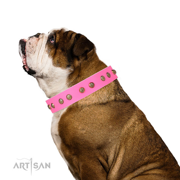 Stylish adornments on stylish walking full grain natural leather dog collar