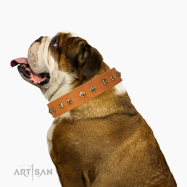 Extraordinary decorations on daily walking dog collar