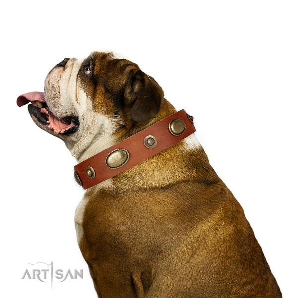 Stylish walking dog collar of natural leather with incredible adornments