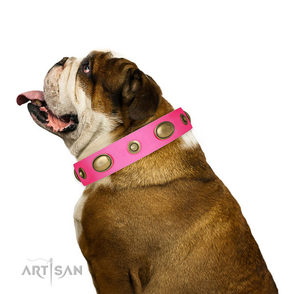 Everyday walking dog collar of genuine leather with significant adornments