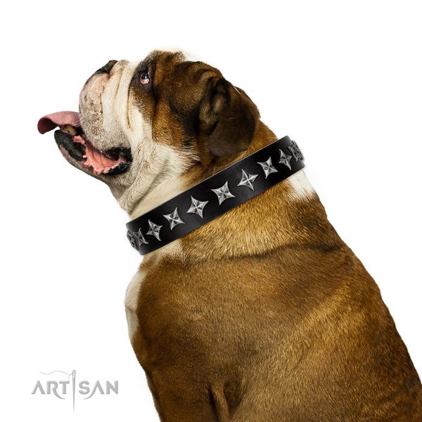 Comfy wearing adorned dog collar of finest quality leather