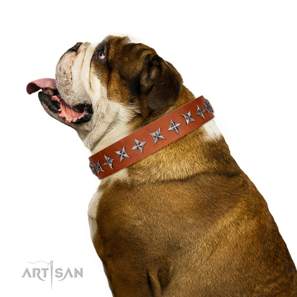 Finest quality genuine leather dog collar with significant studs