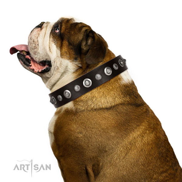 Quality full grain genuine leather dog collar with remarkable adornments