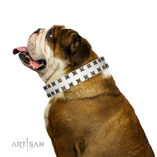 Flexible leather dog collar with studs for your doggie