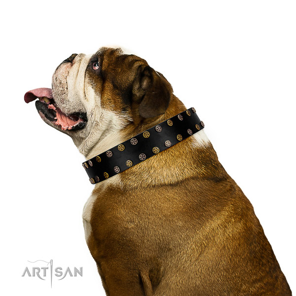 Designer full grain natural leather dog collar with rust resistant adornments