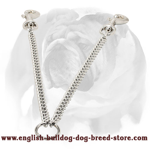 English Bulldog Couple for Walking Dogs