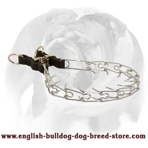 Strong Pinch Dog Collar for English Bulldog