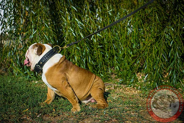 Handmade genuine leather English Bulldog collar