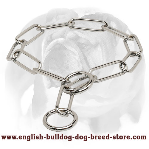 English Bulldog Collar Made of Chrome Plated Steel