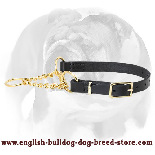 English Bulldog Collar Made of Leather and Brass