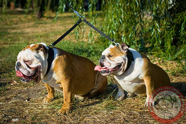 Easy-to-adjust English Bulldog nylon collar