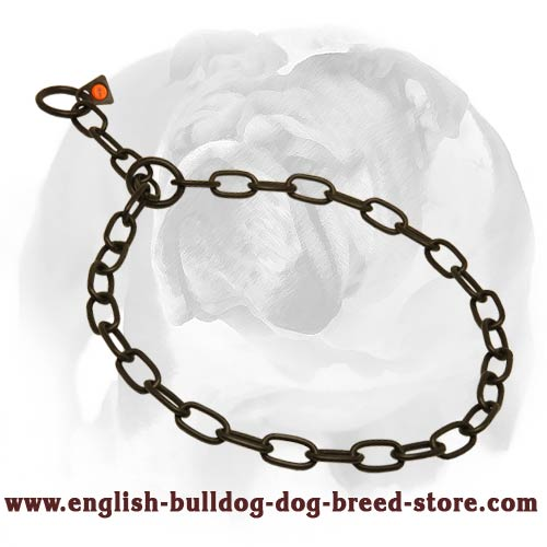 Metal Chain Collar for English Bulldog