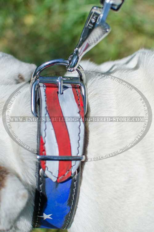 Safe leather dog collar for English Bulldog breed