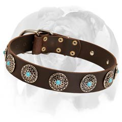 English Bulldog leather dog collar with blue stones
