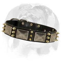 English Bulldog leather dog collar with massive plates and spikes