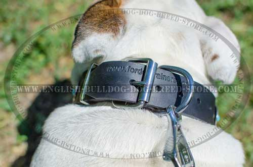 Leather dog collar with fancy decorations for English Bulldog breed