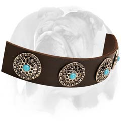English Bulldog collar with rust-proof D-ring and nickel-plated buckle