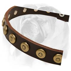 English Bulldog collar with beautiful rust-proof decorations