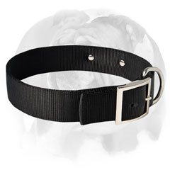 English Bulldog collar with rust-proof tag